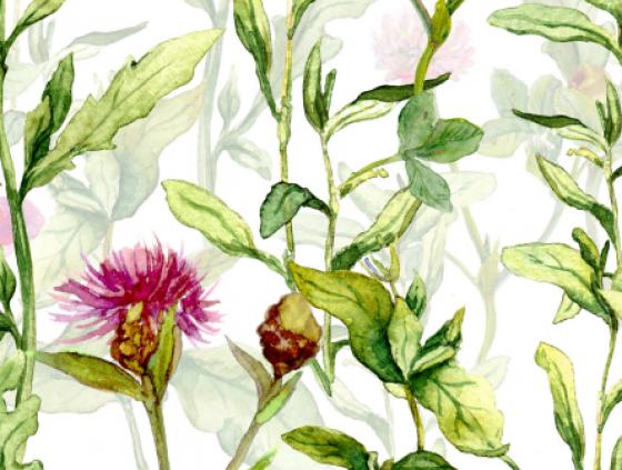 Lijst van inheemse planten nuttig voor de biodiversiteit