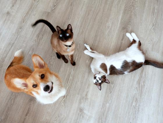 Premie voor de vaccinatie van katten en honden