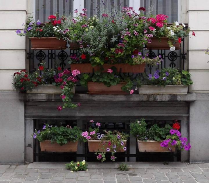 Gratis verdeling van bloemzaden